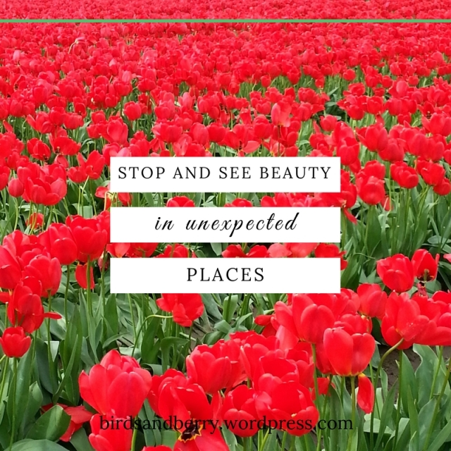 seeing-beauty