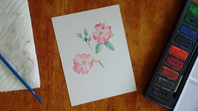 wild rose art